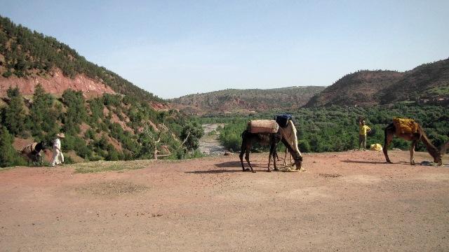 Maroc vallée de l'Ourika transport des récoltes