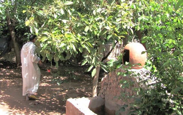 Maroc vallée de l'Ourika jardin d'une maison Berbère.